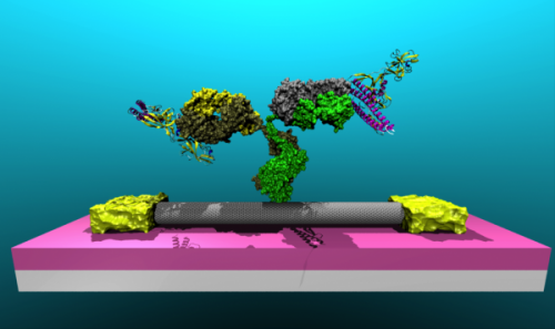Penn Researchers Attach Lyme Disease Antibodies to Nanotubes, Paving Way for Diagnostic Device