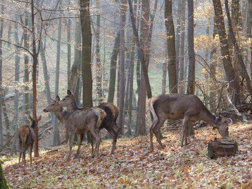 Personality differences:  In lean times red deer with dominant personalities pay a high price