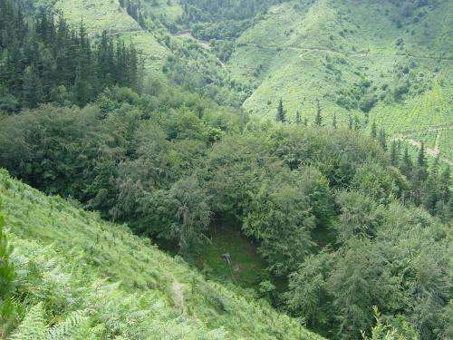 Pine plantations provide optimum conditions for natural forests to develop underneath them