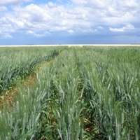 Plant biology advances rapidly to help feed the world