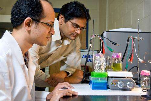 Power plants: Researchers explore how to harvest electricity directly from plants