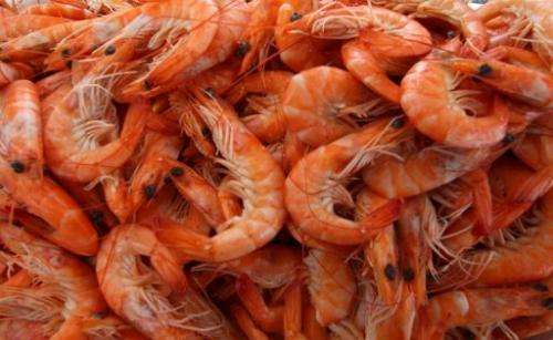 Prawns are pictured in August 12, 2004