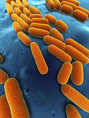 Predictive model a step toward using bacteria as a renewable fuel source