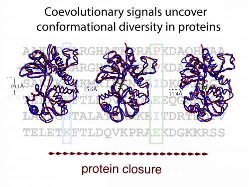 Proteins' passing phases revealed