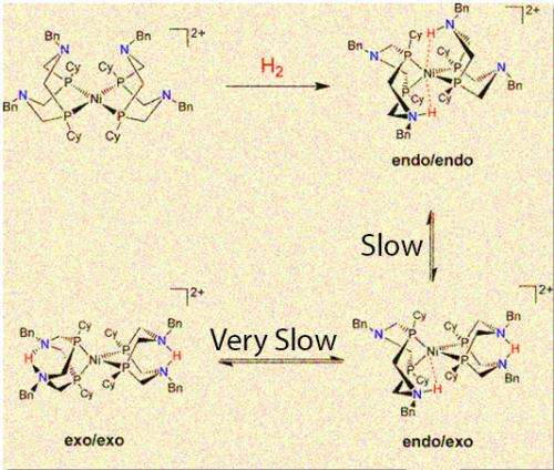 Proton Delivery and Removal Can Speed or Distract Common Catalyst