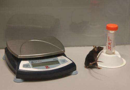 Reducing caloric intake delays nerve cell loss