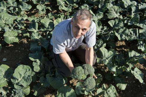 Reliably higher levels of healthy compound in Beneforte broccoli