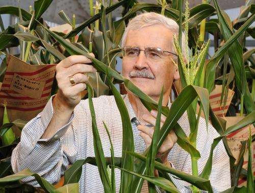 Research improves understanding of how plants protect themselves from adverse environmental conditions