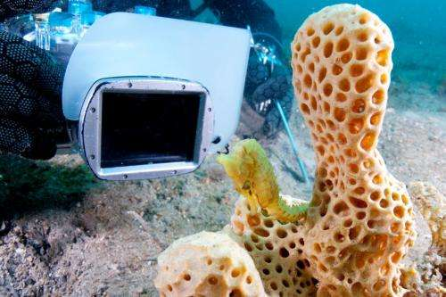 Research puts seahorse flash photography safely in the frame