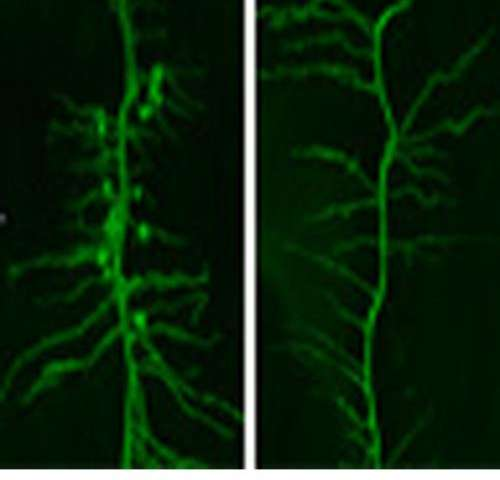 Research unveils clues about protein mechanism critical to plant growth and yield