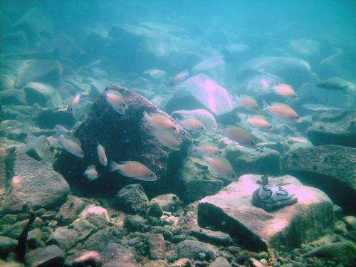 Risk management in fish: How cichlids prevent their young from being eaten