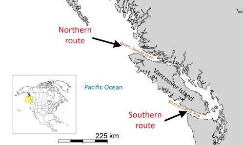Salmon may use magnetic field as a navigational aid