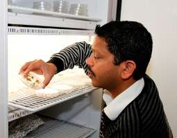 SDSU works toward developing drought-tolerant wheat
