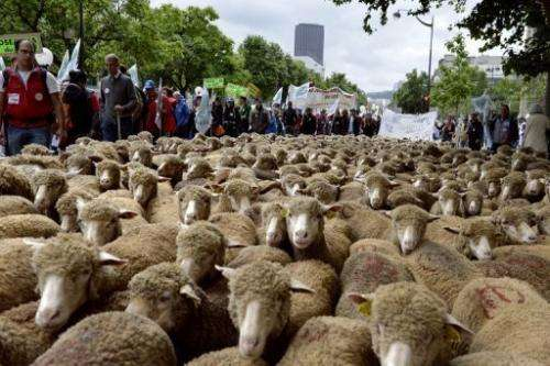Shepherds take part in a rally in Paris on June 23, 2013 organized by two main farmers unions