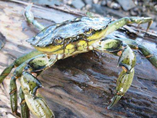 Ship noise impairs feeding and heightens predation risk for crabs