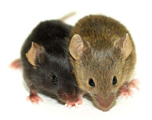 Single molecule shown to regulate emotional behavior of mice