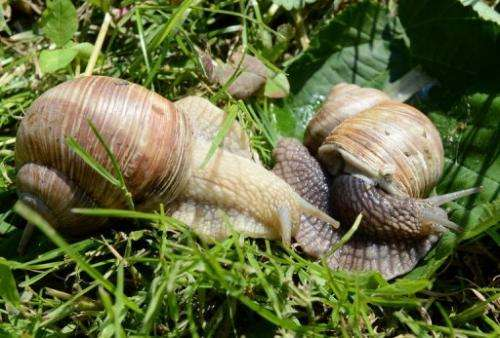 Polish snail farms inch towards huge potential