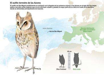 São Miguel scops owl was wiped out by man's arrival in the Azores, researchers find