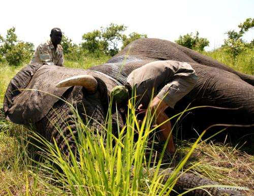 South Sudan expands efforts to protect remaining elephants