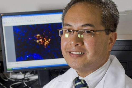 Stem cells help repair traumatic brain injury by building a 'biobridge'