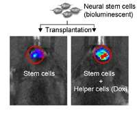 Stem cells may do best with a little help from their friends