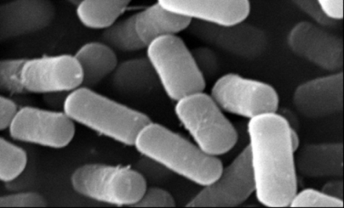 Structural studies of a toxin from Bacillus cereus that causes diarrhea