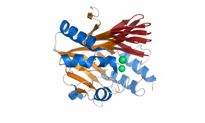 Study analyzes dynamical properties in antibiotic resistance enzyme