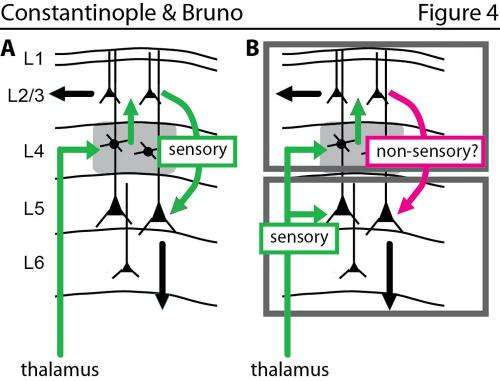 Study appears to overturn prevailing view of how the brain is wired
