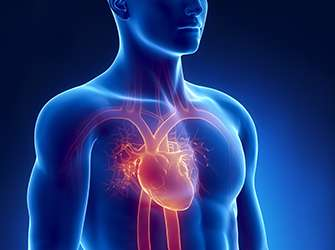 The first biological heart valve implanted into a beating heart