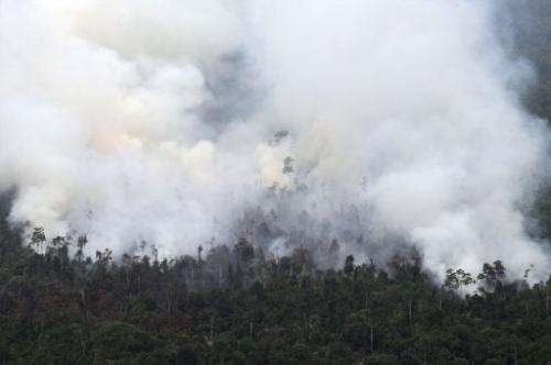 Thick smoke billows from raging forest fires in Indonesia's Sumatra island on June 21, 2013