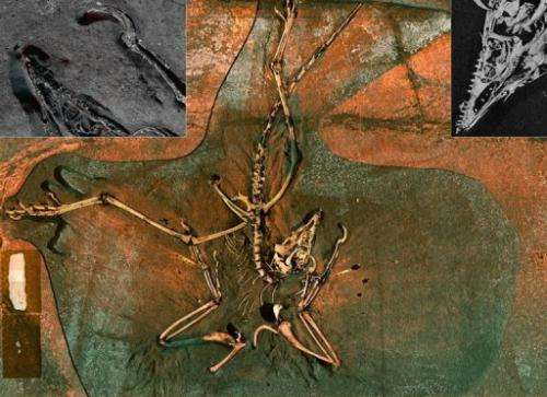 This image recieved May 11, 2010 courtesy of the SLAC National Accelerator Laboratory shows an Archaeopteryx