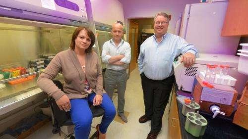 Thymus teaches immune cells to ignore vital gut bacteria