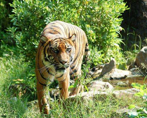 Tigers may still come roaring back