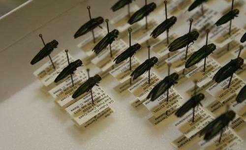 Tree-killing insect emerald ash borer found in Georgia