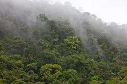 Tropical cloud forests filter half of all surface water within dam watersheds