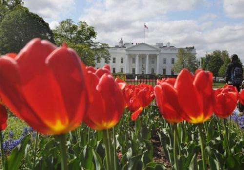 Tulips are seen in a flower bed in Lafayette Square across from the White House on April 22, 2013 in Washington