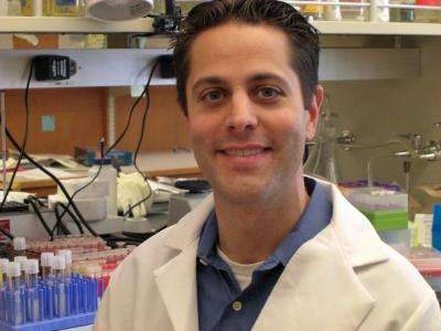 UCLA study suggests potential therapy for HIV