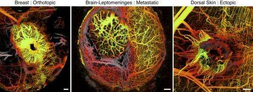 Uncovering cancer's inner workings by capturing live images of growing tumors