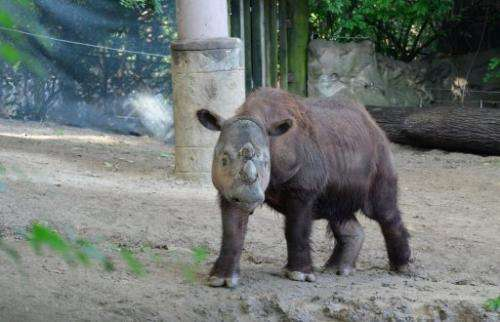 US-INDONESIA-ANIMAL-CONSERVATION