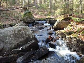 Wetlands could be key in revitalizing acid streams, UT Arlington researchers say