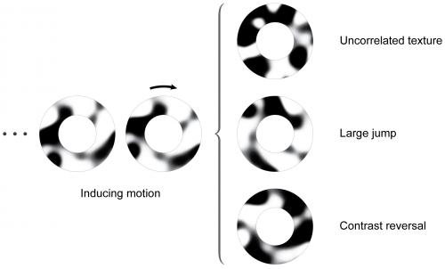 Motion perception revisited: High Phi effect challenges established motion perception assumptions