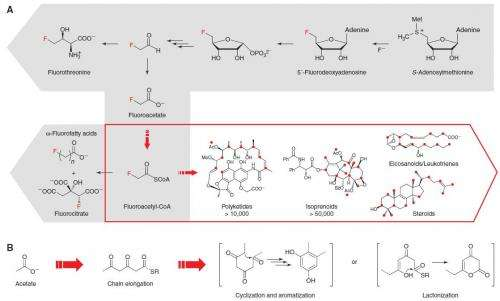 New method of incorporating fluoride into drugs