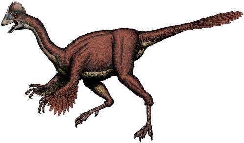 A 'chicken from hell' dinosaur