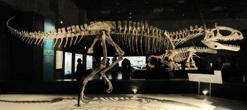 """A file picture taken on March 13, 2009 shows the skeleton of a Cryolophosaurus Ellioti, diplayed at the exhibition """"Dinosau"""