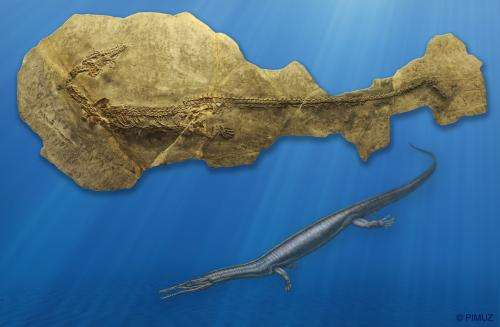 Amphibians and dinosaurs were the new large predators after the mass extinction