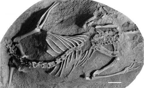 Asteroid that wiped out dinosaurs may have nearly knocked off mammals, too