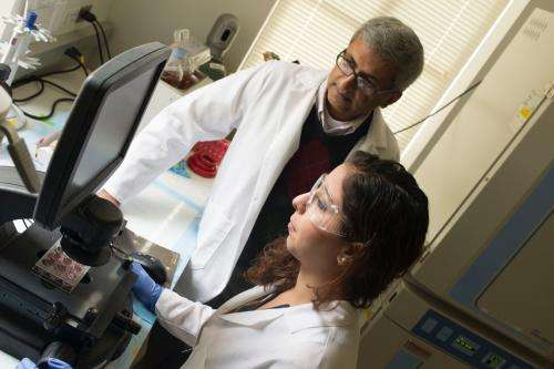 Cancer uses abdominal stem cells to fuel growth and metastasis