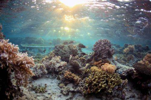 Coral chemical warfare: Suppressing a competitor enhances susceptibility to a predator
