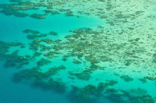 Coral growth rate plummets in 30-year comparison