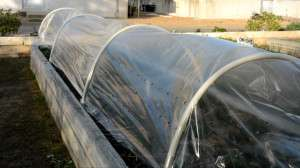 Easy, affordable cover extends growing season in home gardens